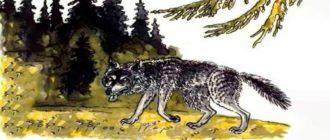 """Картинка к сказке М. Е. Салтыкова-Щедрина """"Бедный волк"""""""