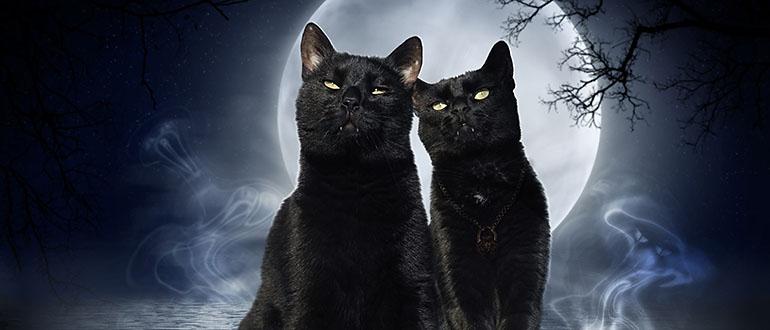 Картинка к сказке Александра Вайца Черные заколдованные кошки