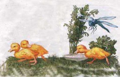 Картинка к сказке Бориса Житкова Храбрый утенок