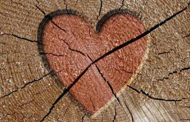 Картинка к сказке Гримм Любовь и горе поровну