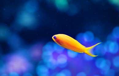 Картинка к сказке Гримм Морская рыбка